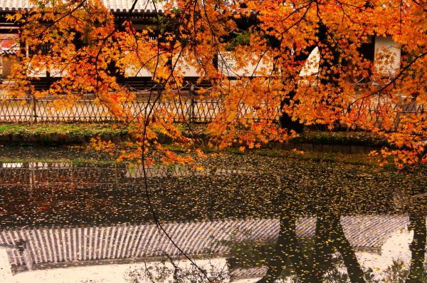 奈良公園 紅葉 東大寺1_2