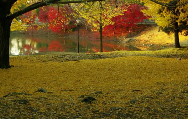 奈良公園 紅葉 落ち葉3