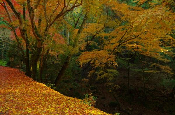 奈良公園 紅葉 落ち葉0