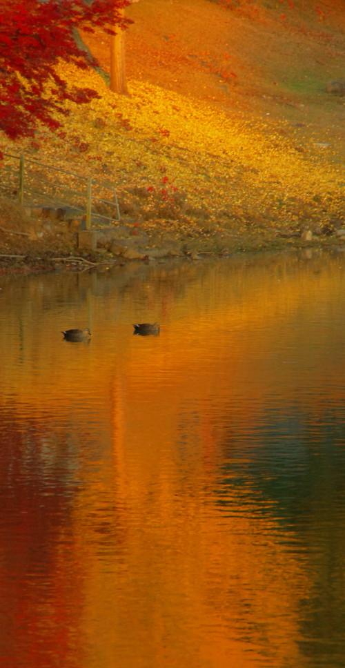 奈良公園 紅葉 大仏池31_1