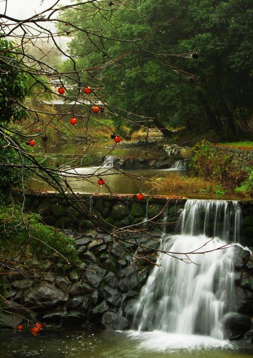 明日香村 柿 滝