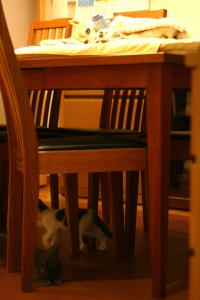テーブルですが・・・。