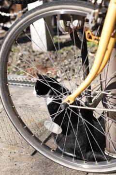 車輪とネコ