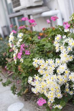 道ばたに花