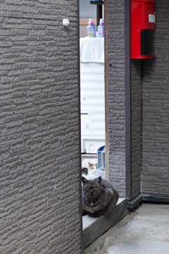隙間からネコ
