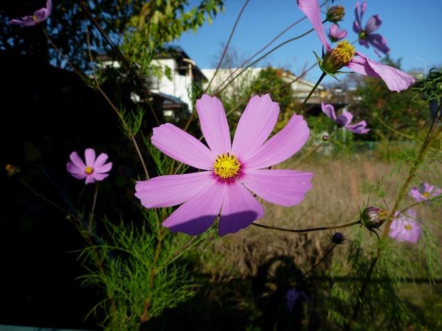 20141115_HMR_01.jpg