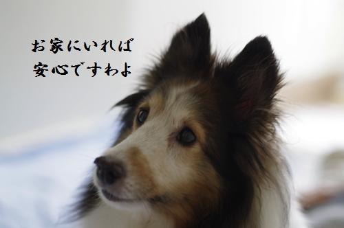 _IGP3601.jpg
