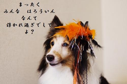 _IGP4111_20121030210826.jpg