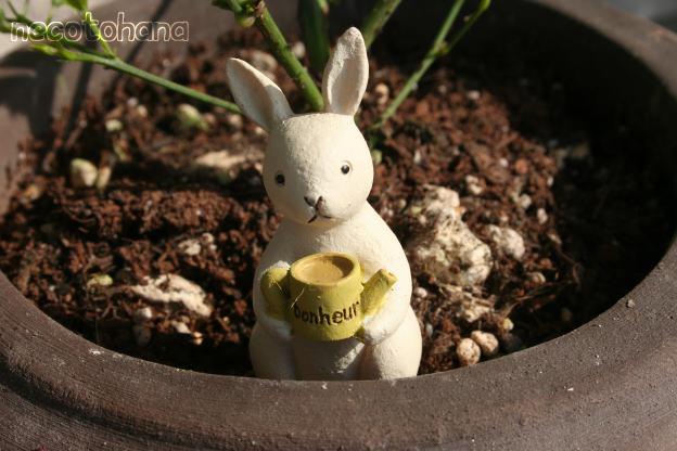 IMG_1182ウサギ2
