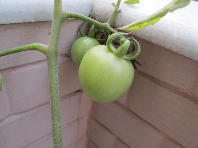 jiro-saburo-tomato200113.jpg