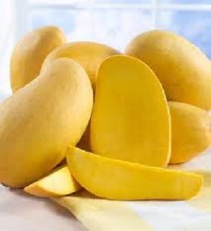 safeda-mango12.jpg