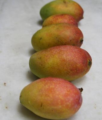 sindoor-mango.jpg