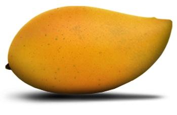 totapuri-mango12.jpg