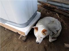 番犬が洗濯機を守る