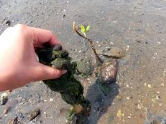 海藻を取り除くと