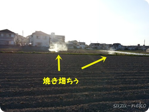 畑を焼いてました