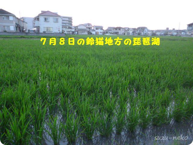 7月8日の稲造たち