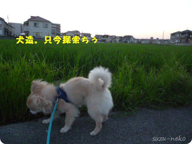 クンクン♪草の匂い♪