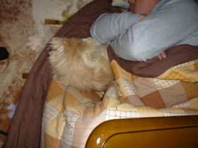 とーちゃんと寝る2
