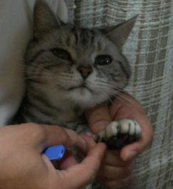わんだー爪切り
