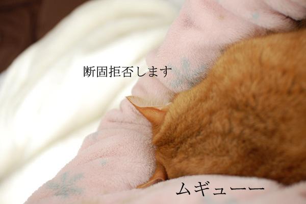 20140206_10a.jpg