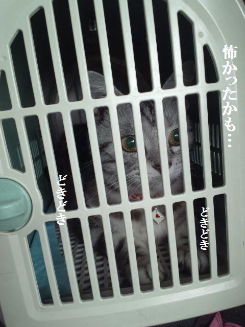 DCF00031_20120704181231.jpg