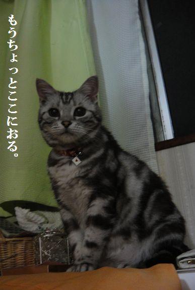 DSC03822_20120905224543.jpg