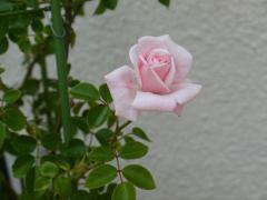 P1010734_R.jpg