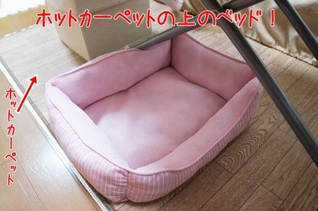 ホットカーペットの上のベッド