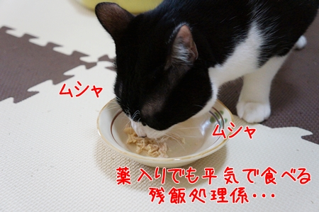 気にせず食べる