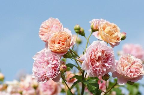 ピンクオレンジ×青空
