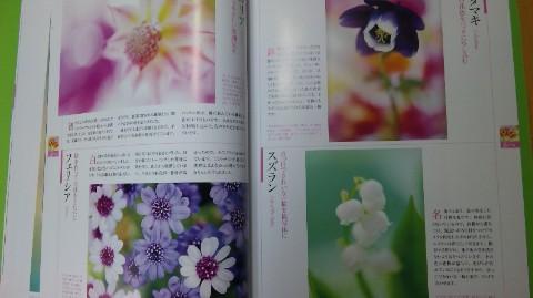 花の写真館2