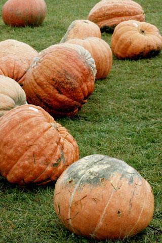 ハロウィンかぼちゃ?
