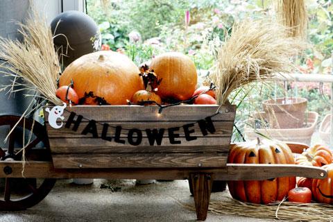 かぼちゃとか秋の味覚