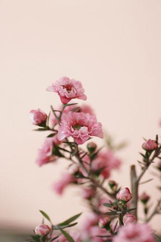 花の美術館ピンクのお花
