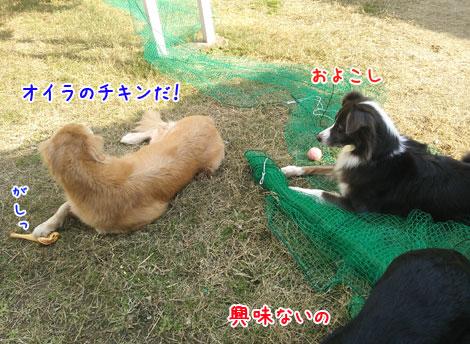DSC_1639aquo2w47.jpg