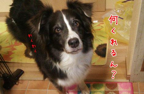 DSC_2253aquo2w47.jpg