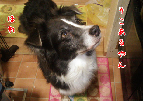 DSC_2254aquo2w47.jpg