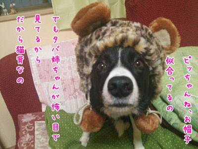 DSC_2388akuo2w.jpg