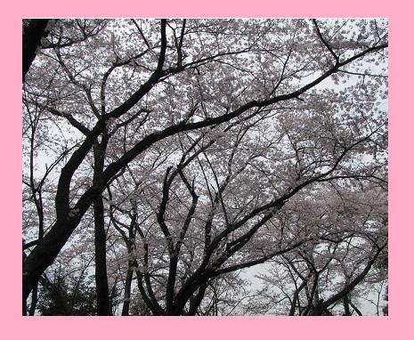 IMG_2135 春の光景