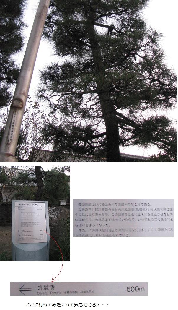 IMG_4367 三本松