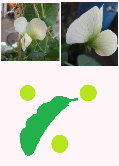 IMG_4603 豆の花