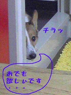 chiro001.jpg