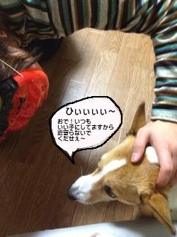 kowaizo-.jpg