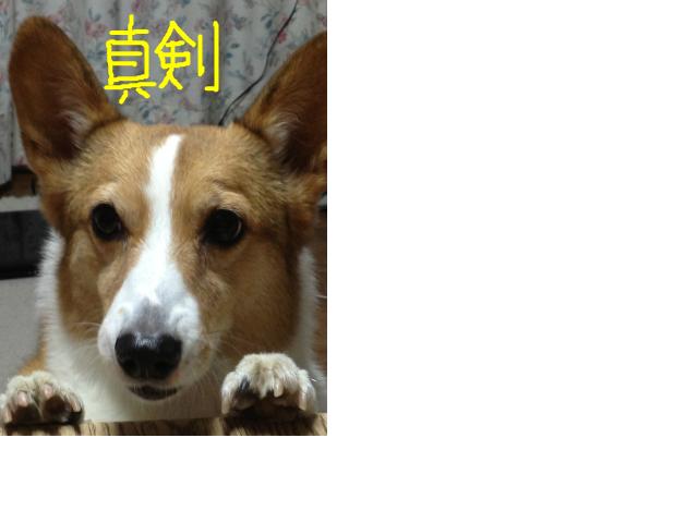 snap_niko2ojiro_2013122143128.jpg