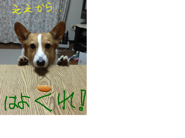 snap_niko2ojiro_2013122143533.jpg