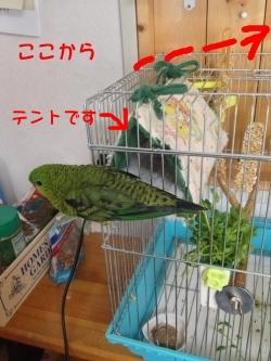 torikago-01.jpg