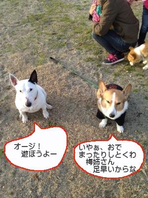 umejiro77.jpg