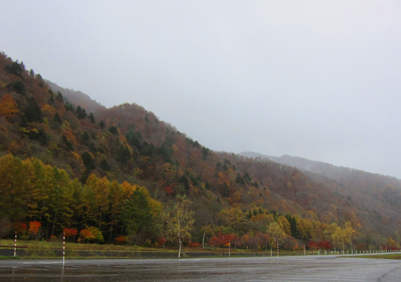 ミニ尾瀬公園1103