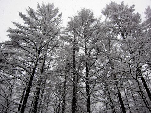 奥会津の冬
